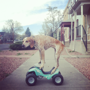 dog on a toy car