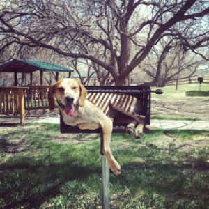 dog in a park grill